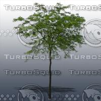 JTX_TREE014.psd.zip