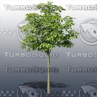 JTX_TREE015.psd.zip
