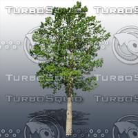 JTX_TREE017.psd.zip