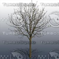 JTX_TREE019.psd.zip