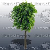 JTX_TREE020.psd.zip