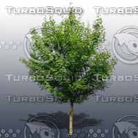JTX_TREE021.psd.zip