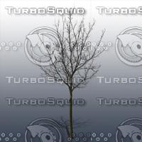 JTX_TREE025.psd.zip