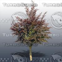 JTX_TREE026.psd.zip