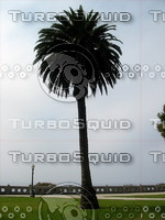 Palm Tree 01 tm.jpg