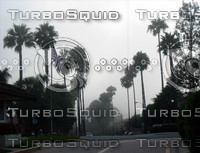 Palms in fog 02.JPG