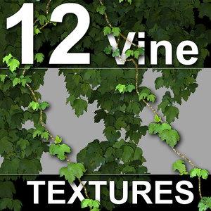 12_Vine_Textures