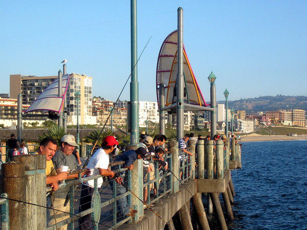 Stock other redondo beach fish for Redondo beach pier fishing