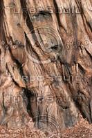 RedwoodBark.JPG