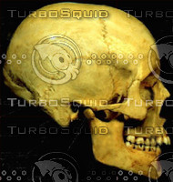Skull side.jpg