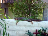 Squirrel 0007.jpg