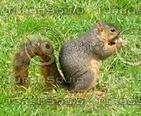Squirrel 04.JPG