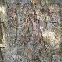 TreeBark-HiRes-300ppi.bmp