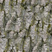 TreeBark-b-HiRes-300ppi.bmp