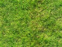 VOIT_grass08027t.jpg