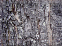 bark 1.jpg
