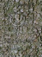 bark10.jpg