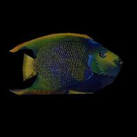 fish1.mdl