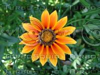 flower_02.JPG