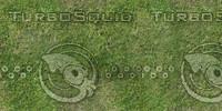grass2080x1040.jpg