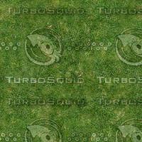 grass2_1024x.bmp