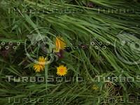 grass_03.JPG