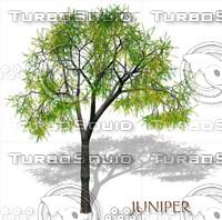 juniper.psd