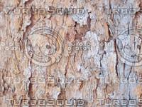 old_spruce_bark.jpg