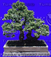 plant015.jpg