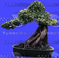 plant167.jpg