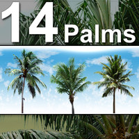 14_Palm_Trees-HiRes.zip