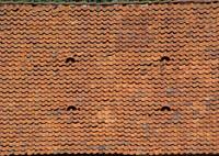 roof-4.jpg