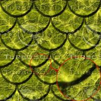snake-scales03.jpg
