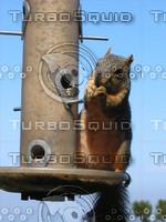 squirrel 02.JPG