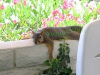 squirrel 06.jpg