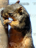 squirrel 03.JPG