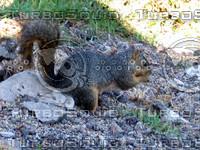 squirrel 04.JPG
