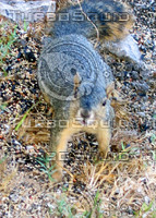 squirrel 05.JPG