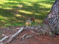 squirrel 1912.JPG