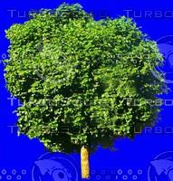 tree054.jpg