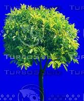 tree129.jpg