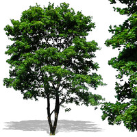 tree14