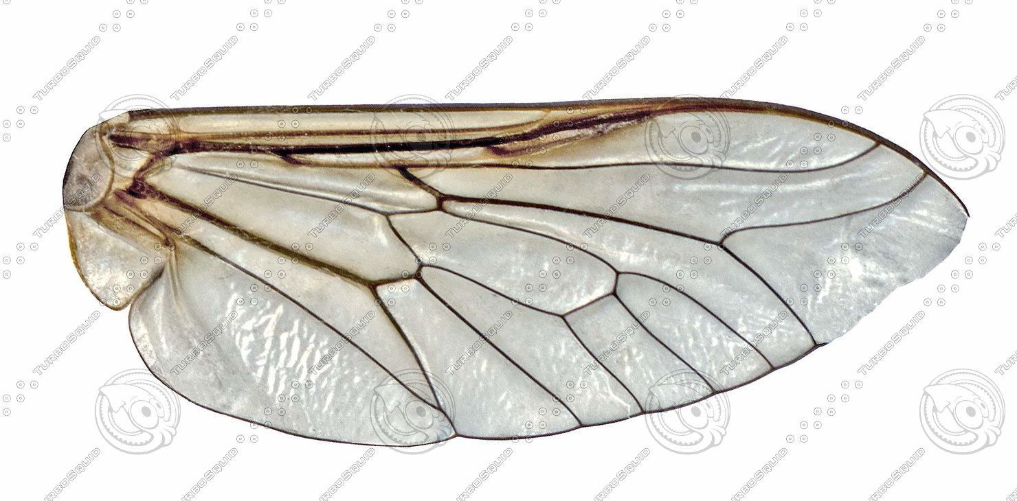 Insect wing texture - photo#26