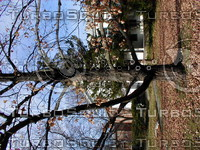 wood0138.jpg