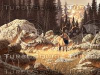 Yellowstone Elk / AF-005