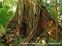 Australia forest 005.jpg