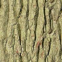 Bark02.zip