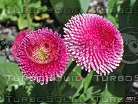 Canberra Floriade 2003 Flower Festival