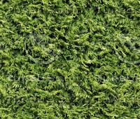 JTX_leaves01.jpg