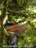 New Zealand forest 001.jpg
